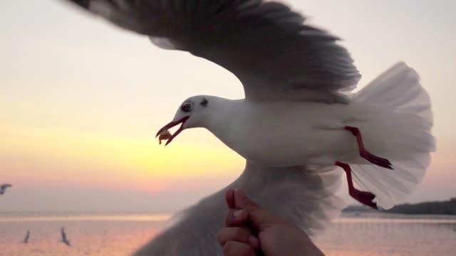 Super Slow motion Seagull Feeding Feeding, Slow motion, Seagull, Flying seagull stock videos & royalty-free footage