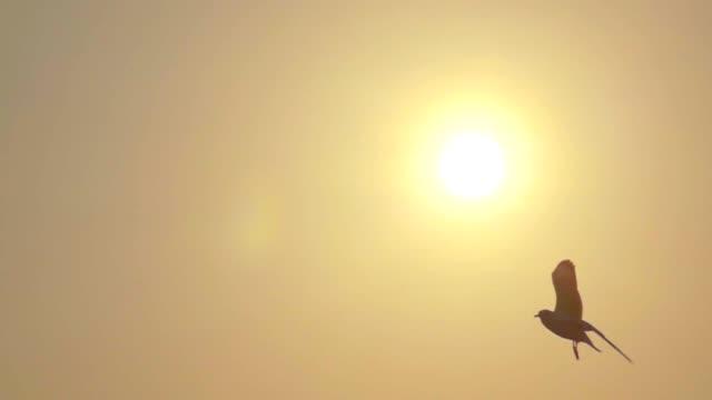 スーパー スロー モーション カモメの飛行 - 鳥点の映像素材/bロール