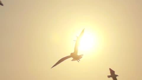 vídeos de stock e filmes b-roll de super slow motion seagull flying - sol