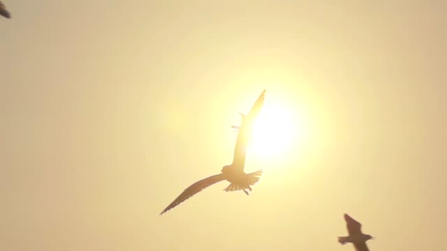 vídeos de stock e filmes b-roll de super slow motion seagull flying - natureza close up