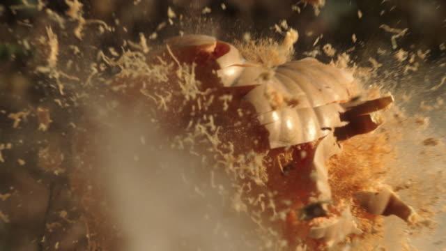2k super slow motion. the bullet hits the pumpkin. pumpkin explodes - pumpkin стоковые видео и кадры b-roll