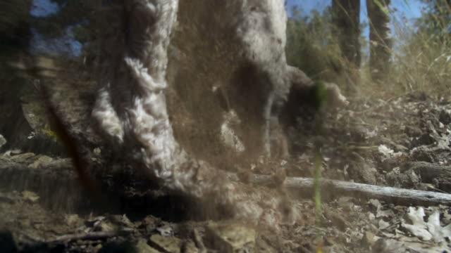 super zeitlupe trüffel-hund - speisepilz pilz stock-videos und b-roll-filmmaterial