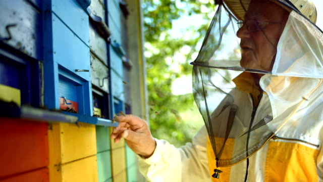 HD Super Slow-Mo: Beekeeper At Work video