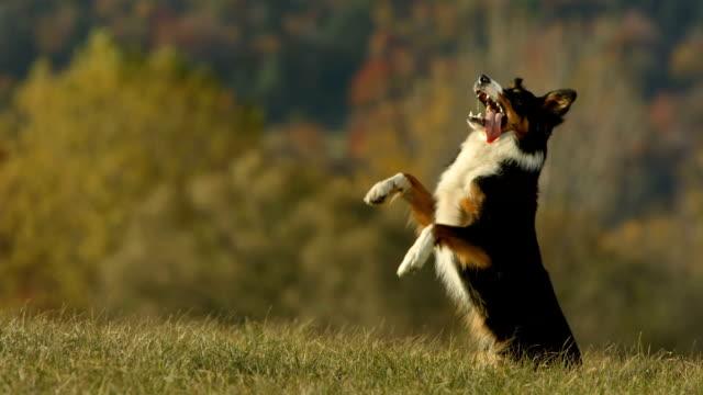 hd super slow-motion: cane in piedi sulla parte posteriore delle gambe - arto inferiore animale video stock e b–roll