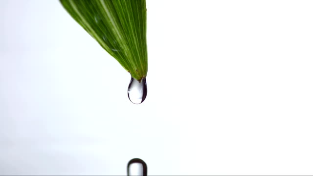 HD Super Slow-Mo: Drop Dripping From A Leaf video