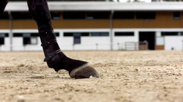 hd super slow-mo: horse hunter kicking sand - hästhoppning bildbanksvideor och videomaterial från bakom kulisserna