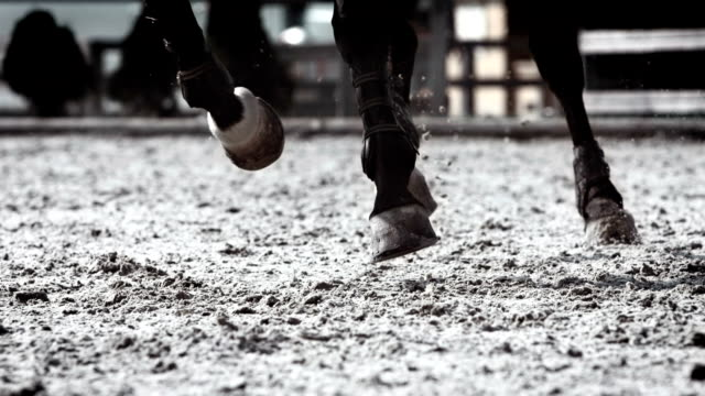 HD Super Slow-Mo: Horse Kicking Sand video