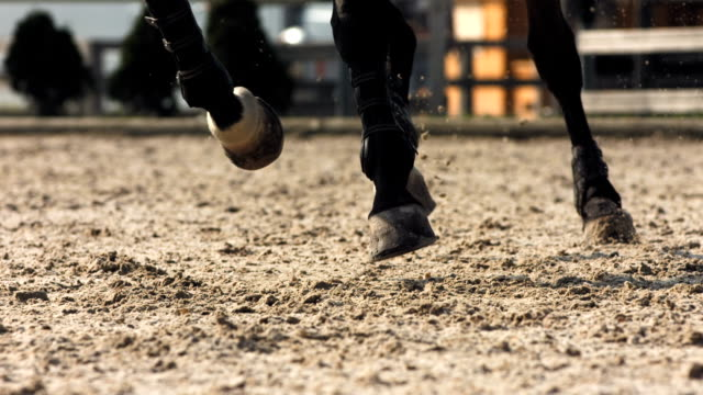 hd super slow-mo: horse kicking sand while running - horse racing stok videoları ve detay görüntü çekimi