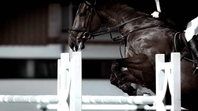 HD Super Slow-Mo: Horse Rider Jumping Over Oxer video