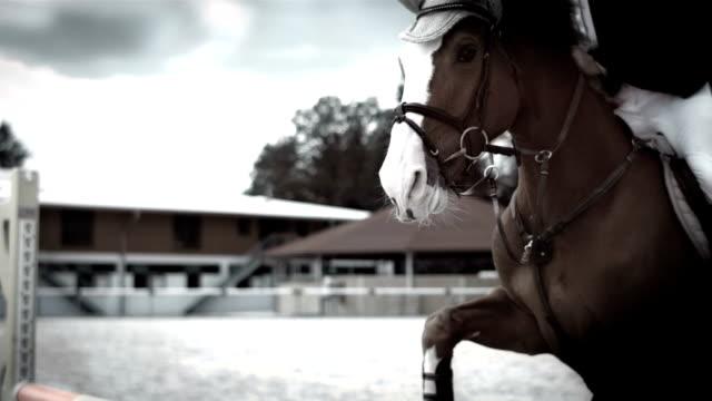 hd super slow-mo: horse rider jumping over oxer - hästhoppning bildbanksvideor och videomaterial från bakom kulisserna