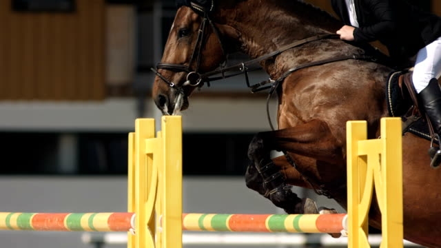 HD Super Slow-Mo: Horse Rider Jumping Over Square Oxer