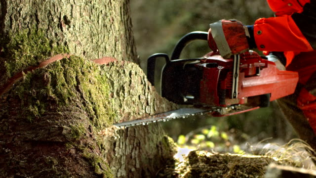 hd super slow-motion: registratore il taglio notch - albero caduto video stock e b–roll