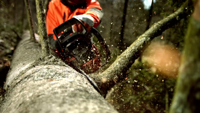 HD Super Slow-Mo: Logger Limbing A Tree video