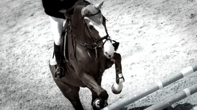 hd super slow-mo: professional show jumping - hästhoppning bildbanksvideor och videomaterial från bakom kulisserna
