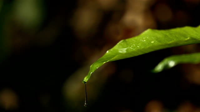 HD Super Slow-Mo: Raindrops Falling On A Green Leaf HD1080p: Super Slow Motion Close-Up shot of raindrops falling and dripping over a green leaf. Recorded at 1050 fps. drop stock videos & royalty-free footage