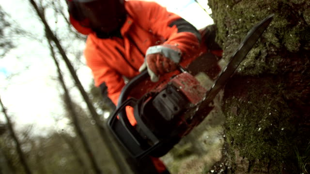 HD Super Slow-Mo: Sawdust Flying While Cutting A Tree video