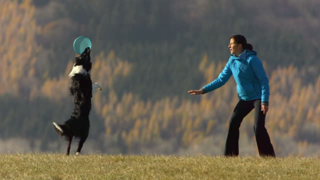 HD Super Slow-Mo: Woman And Dog Playing With Plastic Disk  catching stock videos & royalty-free footage