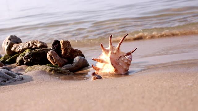 vídeos de stock e filmes b-roll de praia de areia e a onda wets concha. - bugio