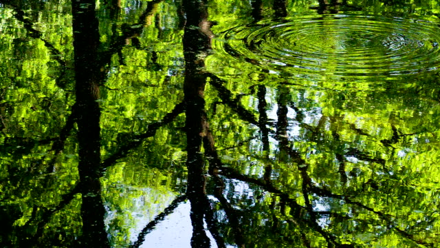 Surface of Forest Pond video