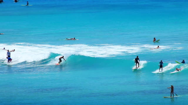 Surfers at Tropical Beach Paradise  waikiki stock videos & royalty-free footage
