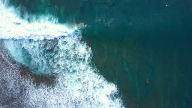 AERIAL, TOP DOWN: Surfers in splashing emerald sea paddling out to the line up video