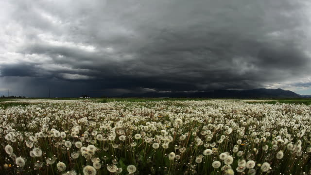 surreal clouds over dandelion field in spring. big storm video