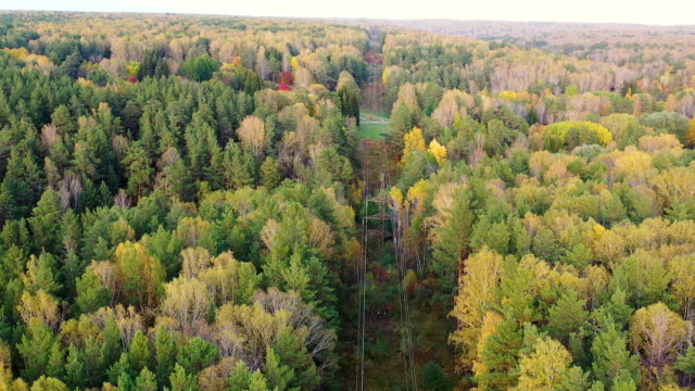 Survey power lines from above in the autumn woods