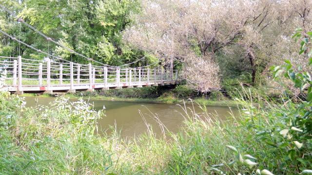 Suspension Bridge located in Parc National de Plaisance, SEPAQ, Outaouais, Quebec, Canada