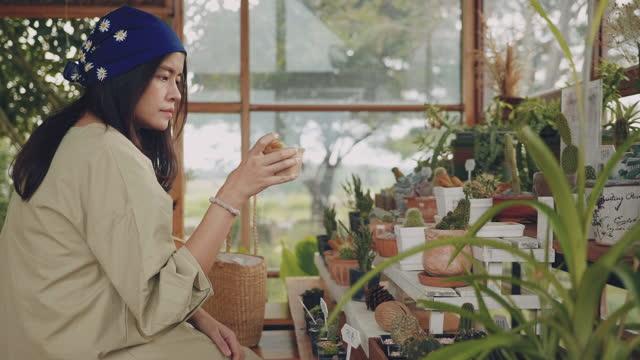 Sustainable Fashion : Asian women shopping cactus tree.