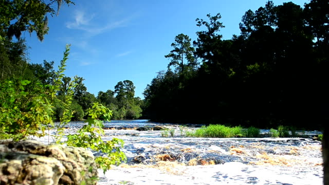 Suwannee River flowing over Big Shoals video