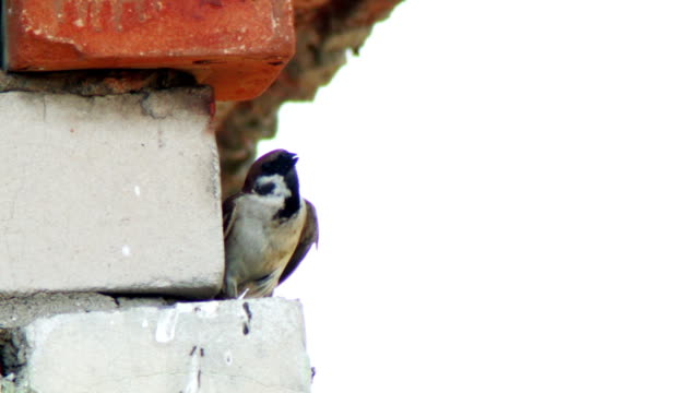 A swallow sitting on a brick building
