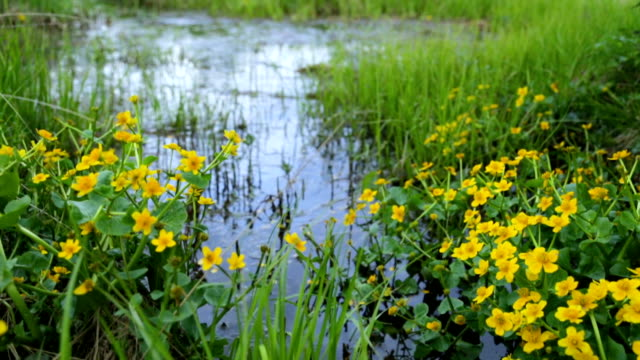 Swamp area in summer