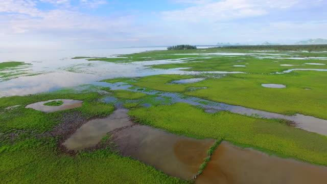 swamp field green grass video