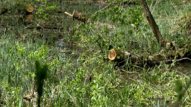 vídeos de stock e filmes b-roll de swamp water plants - margem do lago