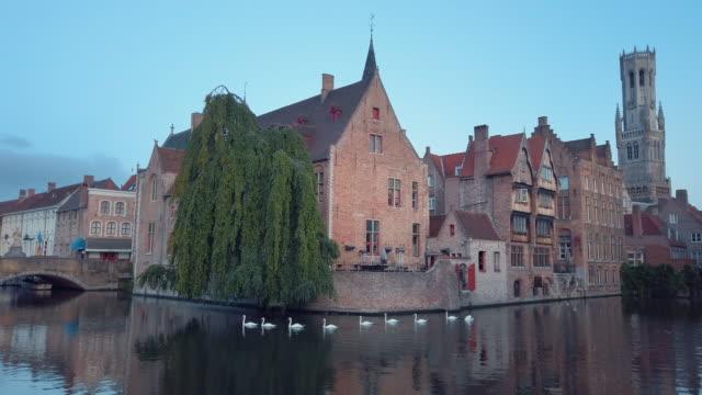 swans of bruges, belgium - bruges video stock e b–roll