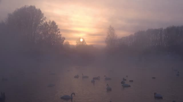 冬の夜の時間で蒸発霧にアルタイ湖スベトラヤで白鳥 - シベリア点の映像素材/bロール