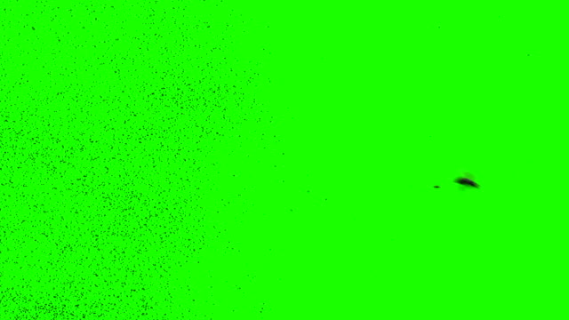 A Swarm Of Bees On A Green Screen video