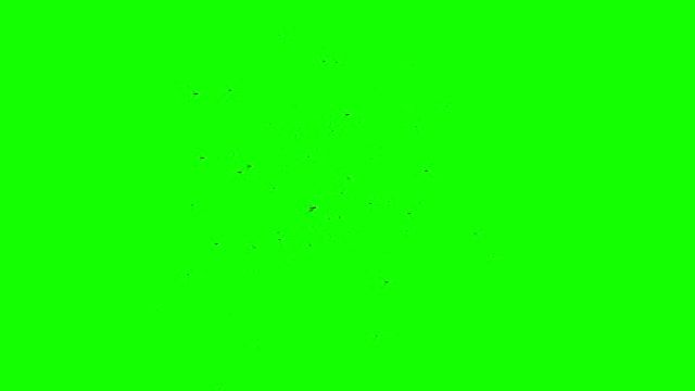 Swarm of Flying Insects with Camera Movement on a Green Screen Background