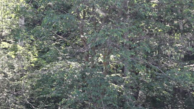 schwarm von mücken im sonnenlicht - grashüpfer stock-videos und b-roll-filmmaterial