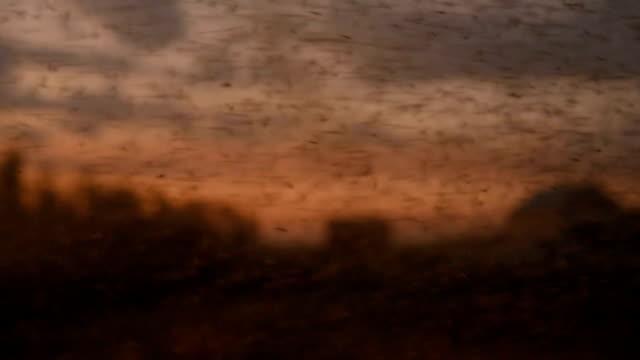 schwarm von midges und mücken - moskitonetz stock-videos und b-roll-filmmaterial