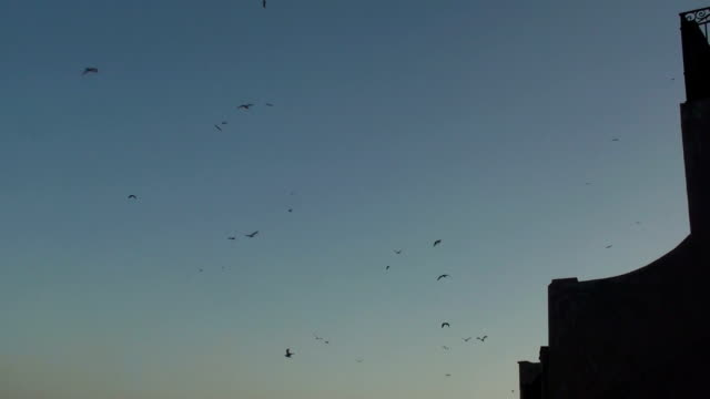 Swarm of Seagulls video