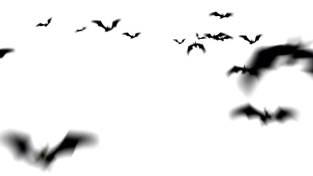 Swarm of Spooky Halloween Bats mit Alpha-Matten – Video