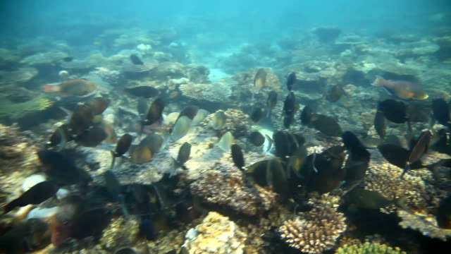 swarm - western australia stock videos & royalty-free footage