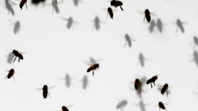 Swarm video