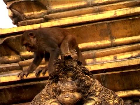 swayambhunath golden roof with monkey, kathmandu, nepal - stupa stok videoları ve detay görüntü çekimi