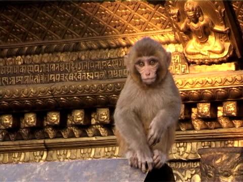 swayambhunath stupa with monkey on golden roof - stupa stok videoları ve detay görüntü çekimi
