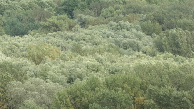 vídeos de stock e filmes b-roll de aerial view: swaying a tops of trees in the summer - oscilar