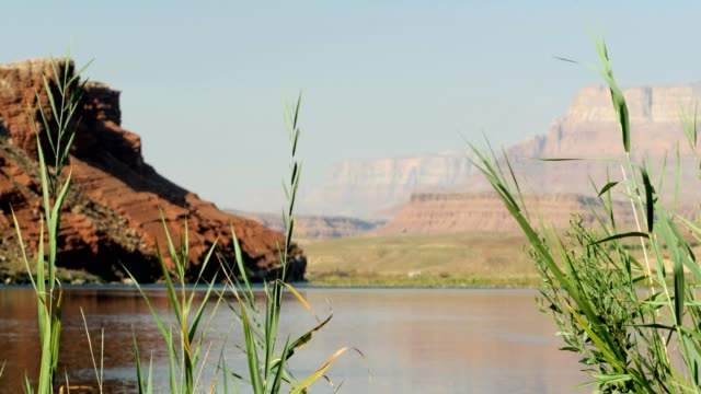 swaying grass by the water with Colorado River Grand Canyon video