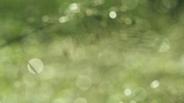 風に揺れる - ガーデンパーティ点の映像素材/bロール