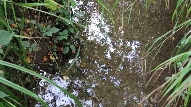 schwankende reflexionen von bäumen und schilf auf langsam bewegtem wasser - faul ast stock-videos und b-roll-filmmaterial